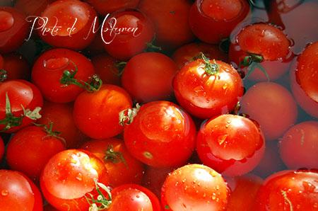 毎年たくさん採れるトマト